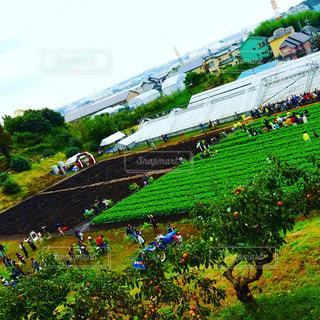 農業 - No.293208