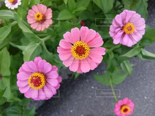花の写真・画像素材[276875]