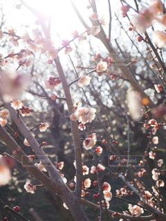 春の写真・画像素材[379083]