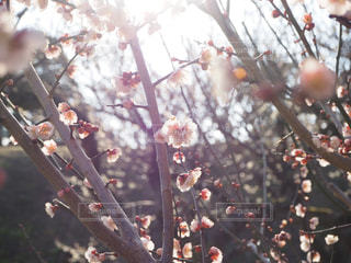 春 - No.387419