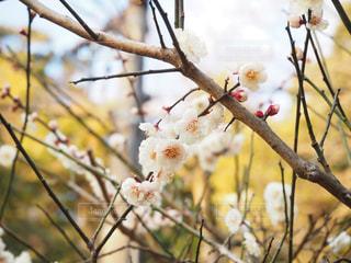 春の写真・画像素材[387420]