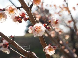 春の写真・画像素材[387423]