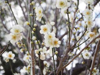 春の写真・画像素材[387424]