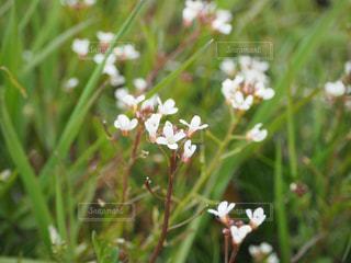 花の写真・画像素材[397273]