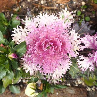 花の写真・画像素材[397274]