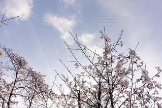 空の写真・画像素材[405364]