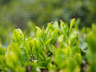 緑の写真・画像素材[460515]