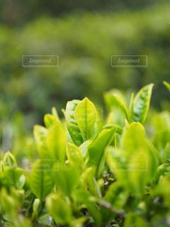 緑の写真・画像素材[460516]