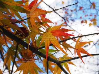 近くの木のアップの写真・画像素材[992372]