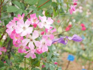 近くの花のアップの写真・画像素材[968417]