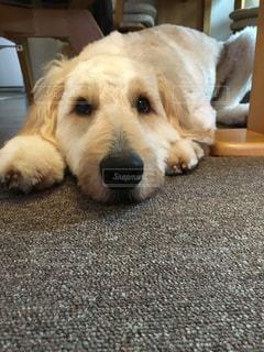 犬の写真・画像素材[277257]