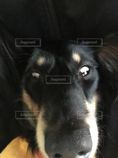 No.277368 犬
