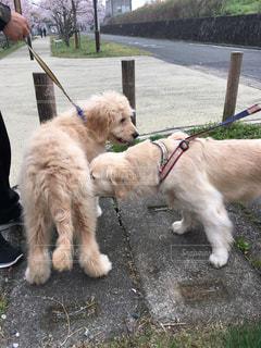 犬の写真・画像素材[277371]