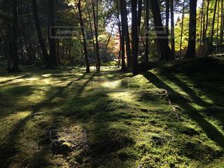森林 - No.277402