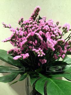 花の写真・画像素材[332496]