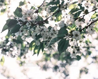 自然の写真・画像素材[4283]