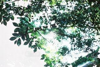 自然の写真・画像素材[4280]