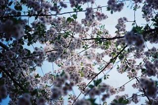 自然の写真・画像素材[4275]