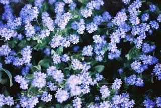 自然の写真・画像素材[4274]