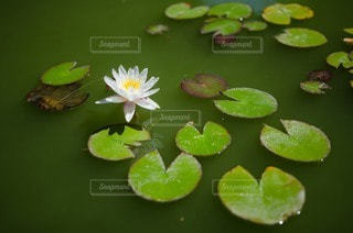 自然の写真・画像素材[4231]