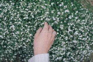 花の写真・画像素材[4225]