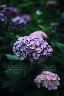 近くの花のアップの写真・画像素材[1262748]