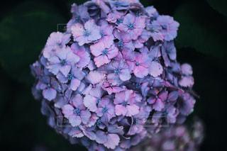 近くの花のアップの写真・画像素材[1262749]