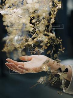花を持っている手の写真・画像素材[1279832]