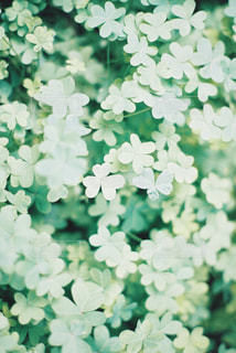 近くの花のアップの写真・画像素材[1279833]
