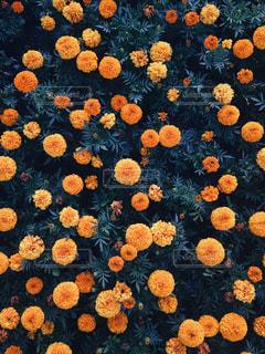 近くの花のアップの写真・画像素材[1279837]