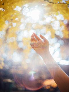 光を掴む手の写真・画像素材[2880119]