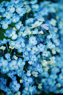 花のクローズアップの写真・画像素材[4451346]