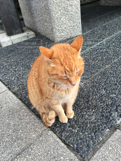 猫 - No.277575