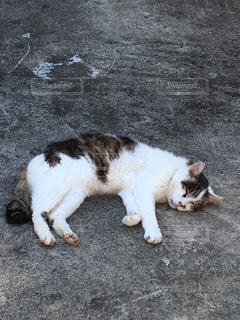 猫 - No.277611