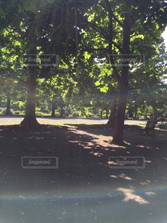 No.277620 公園