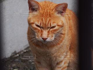 猫 - No.277676