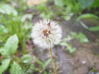 自然の写真・画像素材[278254]