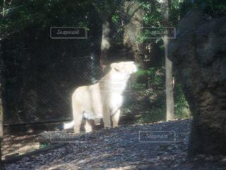 動物 - No.283579