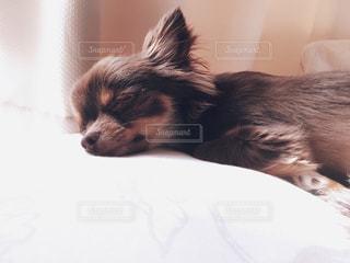 犬の写真・画像素材[277663]