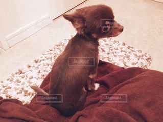 犬の写真・画像素材[277668]