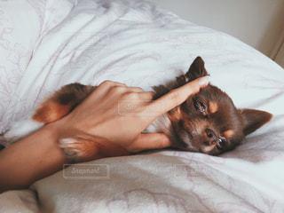 犬の写真・画像素材[277671]