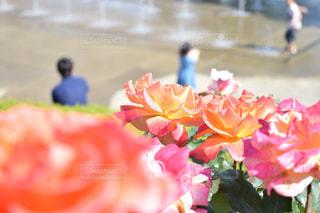 春 - No.506115