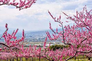 春 - No.506138