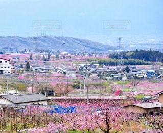 春 - No.506146