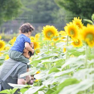 黄色い花の男 - No.719978