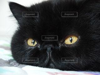 猫の写真・画像素材[298248]