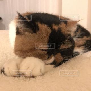 No.298251 猫