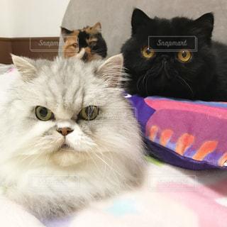 近くに猫のアップの写真・画像素材[1449744]