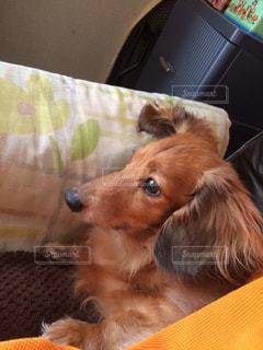 犬 - No.503495