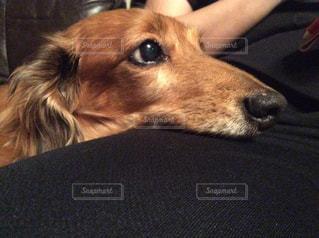 犬 - No.503496